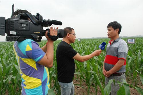 玉米矮化病化学防治药效试验取得重大突破